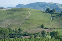 Vineyards on the hills of Langhe, Italy Stock Images