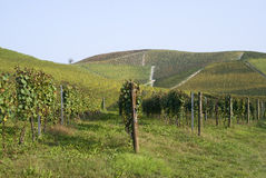 Vineyards on the hills of Langhe Stock Images