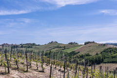 Vineyards and hills in Langhe region, Italy Royalty Free Stock Photo