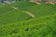 Vineyard and hills of the Langhe region. Piemonte, Italy Stock Photo