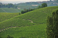 Vineyard and hills of the Langhe region. Piemonte, Italy Royalty Free Stock Image