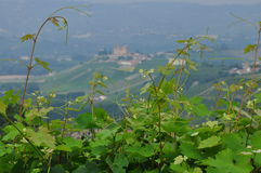 Vineyards and hills of the Langhe region. Piemonte, Italy. Langhe, the main Piedmont wine producing area. Barolo and Barbaresco. Unesco world heritage site stock images