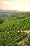 Vineyard and hills of the Langhe region. Piemonte, Italy Royalty Free Stock Images