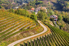 Vineyards on the hills in Piedmont, Italy. Stock Photo