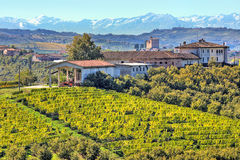 Vineyards on the hills in Piedmont, Italy. Stock Images