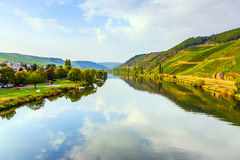 Vineyards at the hills of the romantic river Moselle edge in su. Mmer with fresh grapes and reflection in the river stock image