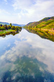 Vineyards at the hills of the romantic river Moselle edge in su. Mmer with fresh grapes and reflection in the river stock photography