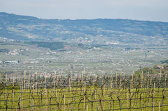 Vineyards on the hills of the Soave area near Verona in northern Italy Stock Photo