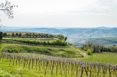 Vineyards on the hills of the Soave area near Verona in northern Italy Stock Image