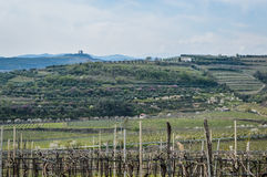Vineyards on the hills of the Soave area near Verona in northern Italy Royalty Free Stock Images