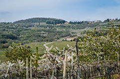 Vineyards on the hills of the Soave area near Verona in northern Italy Stock Images