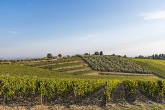 Vineyards on the hills of Tuscany in the golden hour in Autumn i Royalty Free Stock Photos