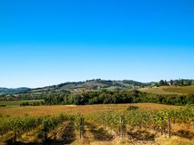 Vineyards in the hills of Tuscany. stock images
