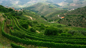 Vineyards are on a hills, view of Douro Valley Royalty Free Stock Photography