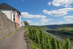 Vineyards along German river Moselle Royalty Free Stock Photos