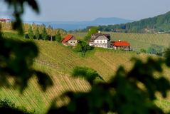 Vineyards with house no.2 Royalty Free Stock Photo