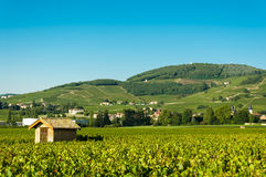 Vineyards, hut and hill of Brouilly, Beaujolais, France Royalty Free Stock Images