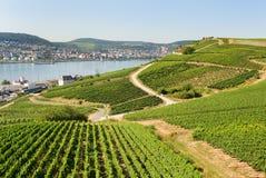 Free Vineyards In Rudesheim Am Rhein Royalty Free Stock Photo - 36675015