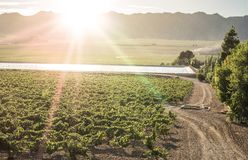 Vineyards and irrigation canal stock photo