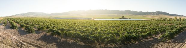 Vineyards and irrigation canal royalty free stock photo
