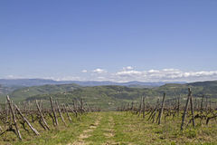 Vineyards in Istria. Landscape with vineyards in Istria royalty free stock photo