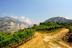 Vineyards of the Italian Alps. Extensive vineyards on gentle hills in the foothills of the Italian Alps, italy, landscape, agriculture, alpine, beauty, clouds royalty free stock photo