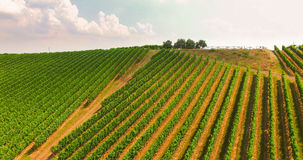 The vineyards on the Italian hills. stock photography