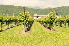 Vineyards Royalty Free Stock Photography