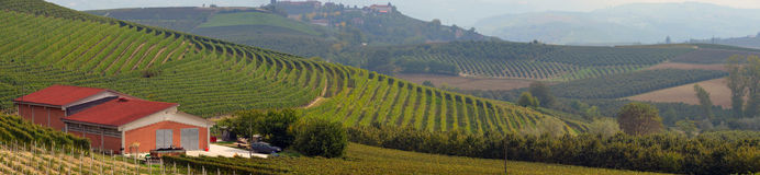 Vineyards in Italy Stock Images