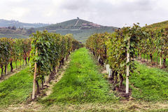 Vineyards in Italy Stock Photos