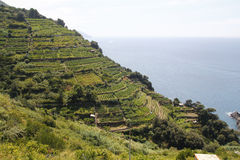 Vineyards at Italy Stock Photography