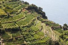 Vineyards at Italy Stock Photos