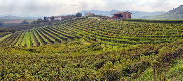 Vineyards in Italy, panorama Royalty Free Stock Image
