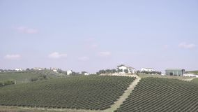 Vineyards in Italy. Shooting of fields planted with grapes stock footage
