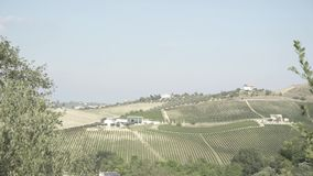 Vineyards in Italy. Shooting of fields planted with grapes stock video