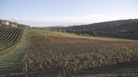 Vineyards in Italy. Shooting of fields planted with grapes stock video footage