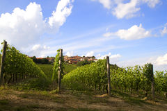 Vineyards in Italy Royalty Free Stock Photo