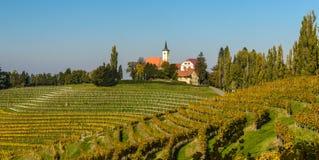 Vineyards in Jeruzalem.Slovenia. Royalty Free Stock Photo