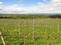 Vineyards of the Kaiserstuhl region Stock Image