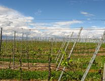 Vineyards of the Kaiserstuhl region Royalty Free Stock Photos