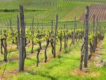 Vineyards of the Kaiserstuhl region Stock Photos