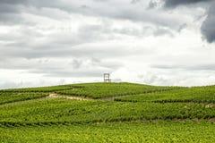 Vineyards of the Kaiserstuhl region, Baden-Wurttemberg, Germany Royalty Free Stock Photos