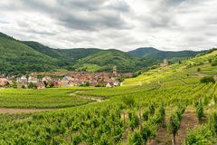 Vineyards in Kaysersberg village in Alsace, France royalty free stock photography
