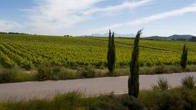 Vineyards in La Anoia stock photos