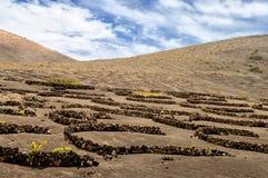 Vineyards in La Geria, Lanzarote Stock Image