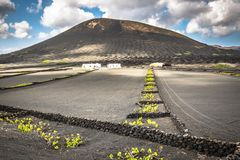 Vineyards in La Geria, Lanzarote, canary islands, Spain. royalty free stock image