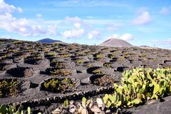 Vineyards in La Geria Lanzarote. Canary islands Spain royalty free stock image