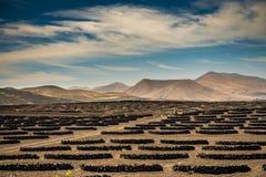 Vineyards in La Geria. Lanzarote - canary islands. Spain Stock Photos