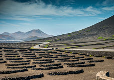 Vineyards in La Geria Stock Photos