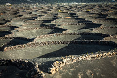 Vineyards in La Geria, Lanzarote, canary islands, Spain. Stock Image